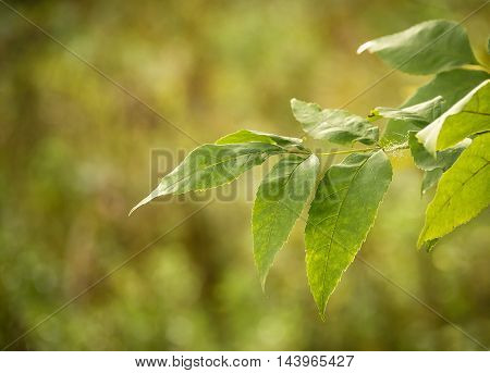 natural green background with selective focus .