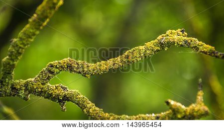 Fallen branches with moss
