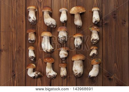 boletus mushrooms in rows on wooden background