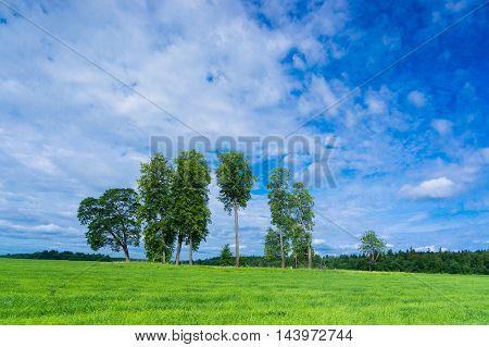 Plain Nature Growth Season
