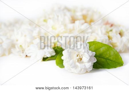 Flower Background Of Jasmine Flowers Spread On White Background