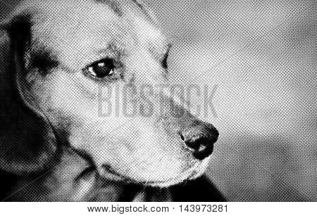Digital generated halftone image with portrait of a dog.