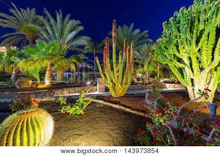 Tropical flora of Gran Canaria island at night, Spain