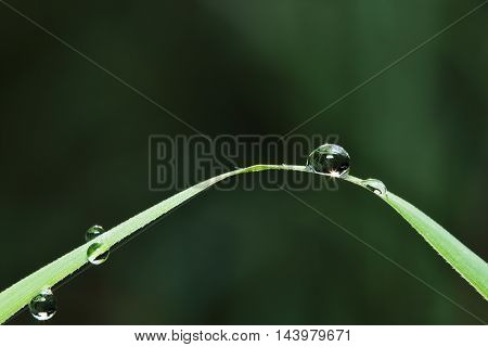 Dew drops on a green leaves close up