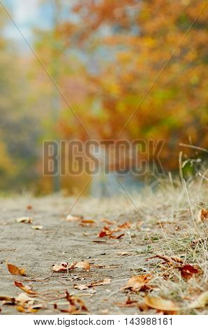 Autumn golden leaves and blured perspective background
