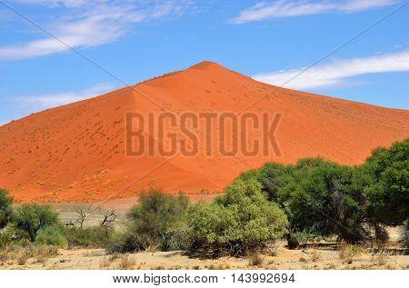 Dune 1. Sossusvlei, Namib Naukluft National Park, Namibia