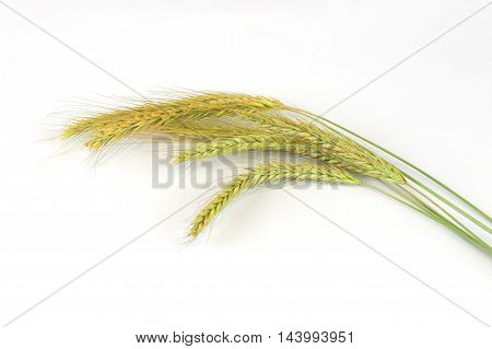 close up on  wheat isolated on white background
