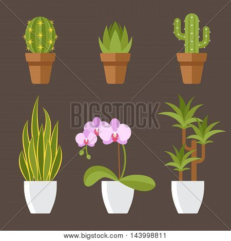 Vector set of home plants in pots for interior decoration. Cactuses aloe snake plant orchid flower dracaena. Flat style.