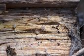 image of baby spider  - Close up view of spider hatchlings freshly emerged fro the egg sack on the underside of a log - JPG