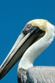 image of budge  - A beautiful day in the Florida Keys and this guy wasn - JPG