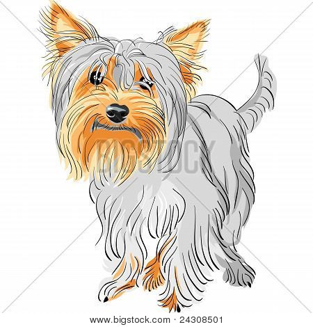 Vector pedigrí perro Yorkshire Terrier