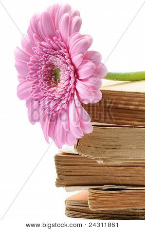 Stack Of Old Books With Pink Mum Flower