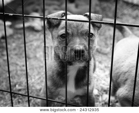 Pup in a pen