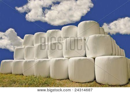 Hay Bales in Plastic Wrap