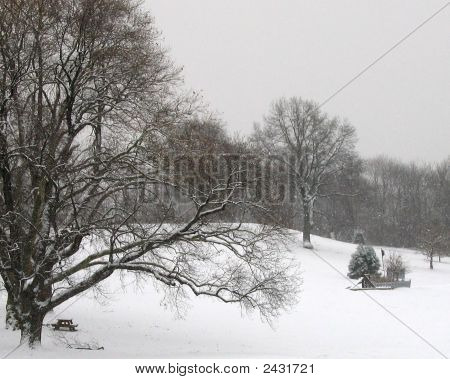 Schenley Park In Snow