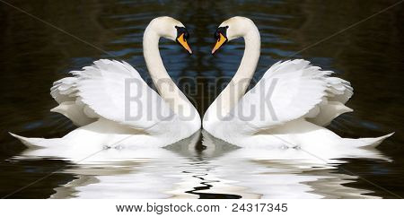 Two swan mirrored looks like a heart