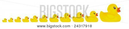 Family duck toy a over white background