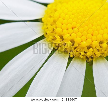 Beautiful flower in the field in spring