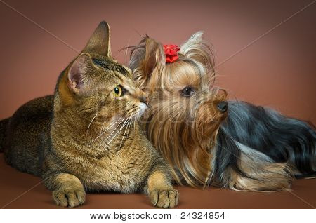 Puppy and cat in studio