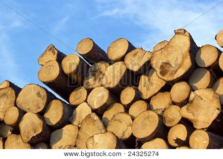 Piled Tree Trunks