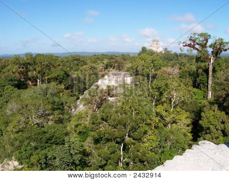 Maya Civilization Ruins Of Tikal