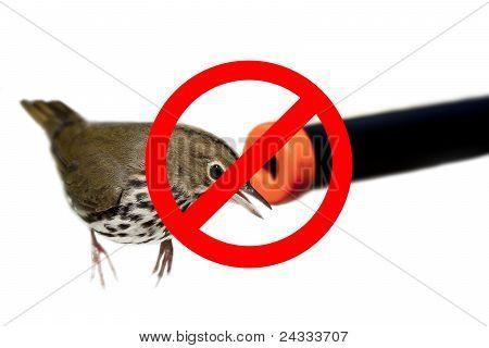 Don't Shoot the Birds
