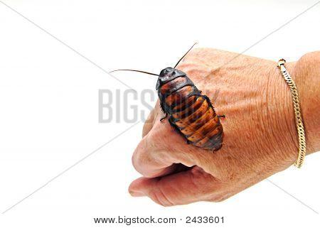 Cockroach On Hand