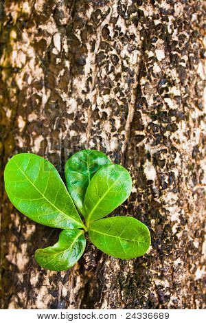 """Old Log With New Shoot And Fresh Green Leaves, """"new Life""""-concept"""