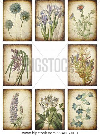 Vintage Botanical Backgrounds