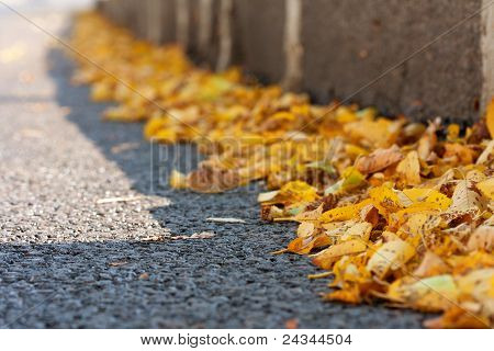 Yellow Autumn Leaves On Asphalt