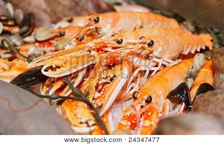 Pile Of Scampi On Fish Market