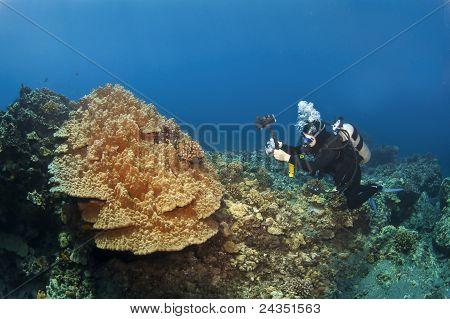 Scuba Diver fotografieren Pilz Coral In Hawaii