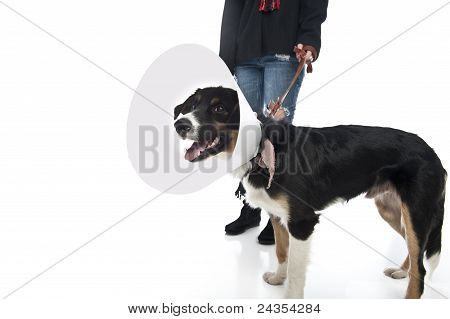 Girl Walks Dog