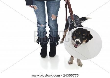 Attractive Veterinarian Examines Dog