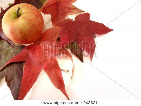 Appleleafs