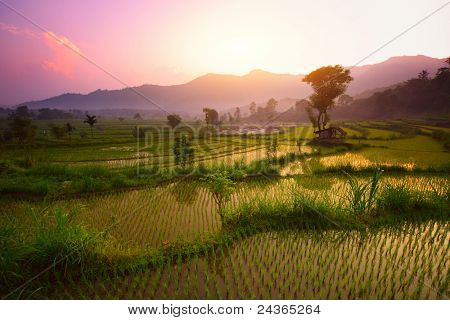 Tropical valley with rice terraces and trees. Bali. Indonesia