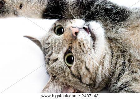 Playful Cat