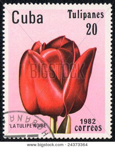 Tulip La Tulipe Noire