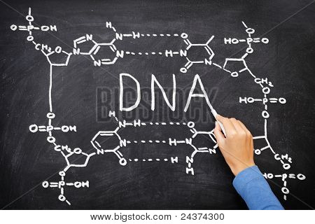 DNA blackboard drawing. Hand drawing chemical structure of DNA on black chalkboard with chalk. Chemisty and biology science education concept.