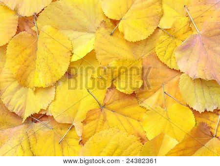 yellow autumn leaves used as background.