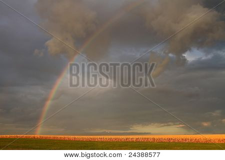 Rainbow over a corn field