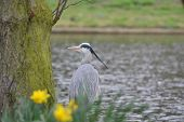 Amazing Great Eastern Egret Bird Sitting Bellow A Tree Top poster