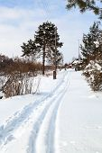 Footpath And Ski Run Along Little Russian Village In Winter Day In Smolensk Region Of Russia poster