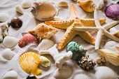 Summer Beach With A Lot Of Seashells, Starfish And Sand As Background. Sea Shells. Travel And Summer poster