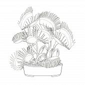 Vector Drawing Of Venus Flytrap Or Dionaea Muscipula In Flowerpot In Black Isolated On White Backgro poster