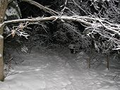 pic of ski-doo  - snow covered treed hiking or snowmobile path
