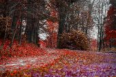 Bright Colors Of Fall. Forest Path With Many Fallen Leaves, Red Autumn Landscape In The Old Park. Wa poster