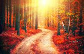 Autumn, Fall scene. Beautiful Autumnal park with pathway. Beauty nature scene. Autumn landscape, Tre poster