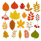 Golden And Red Autumn Leaves, Brunches And Berries. Fall Leaf Vector Cartoon Collection Isolated On  poster