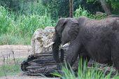 Elephant Roaming Along In The Wild Safari. poster